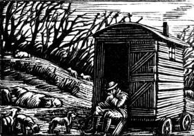 wood-engraving original print: Shepherd for Farmer's Glory